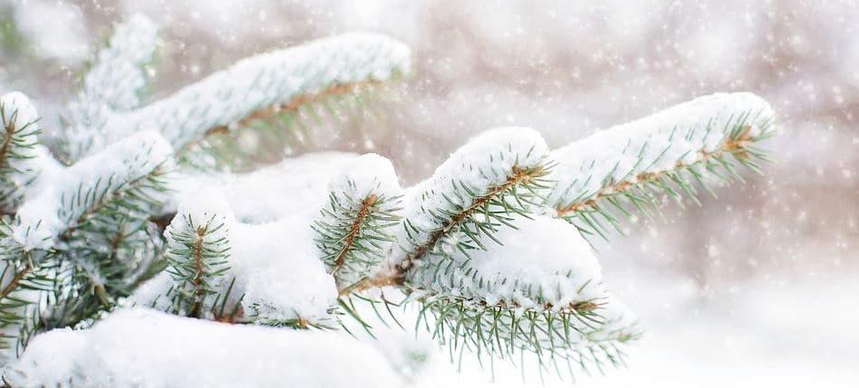 ¿Cuál es la verdadera historia del árbol de Navidad?